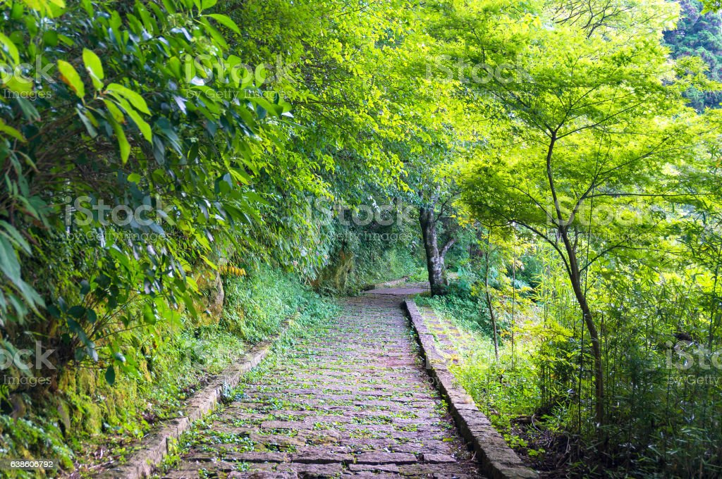 Stone path in forest, park stock photo