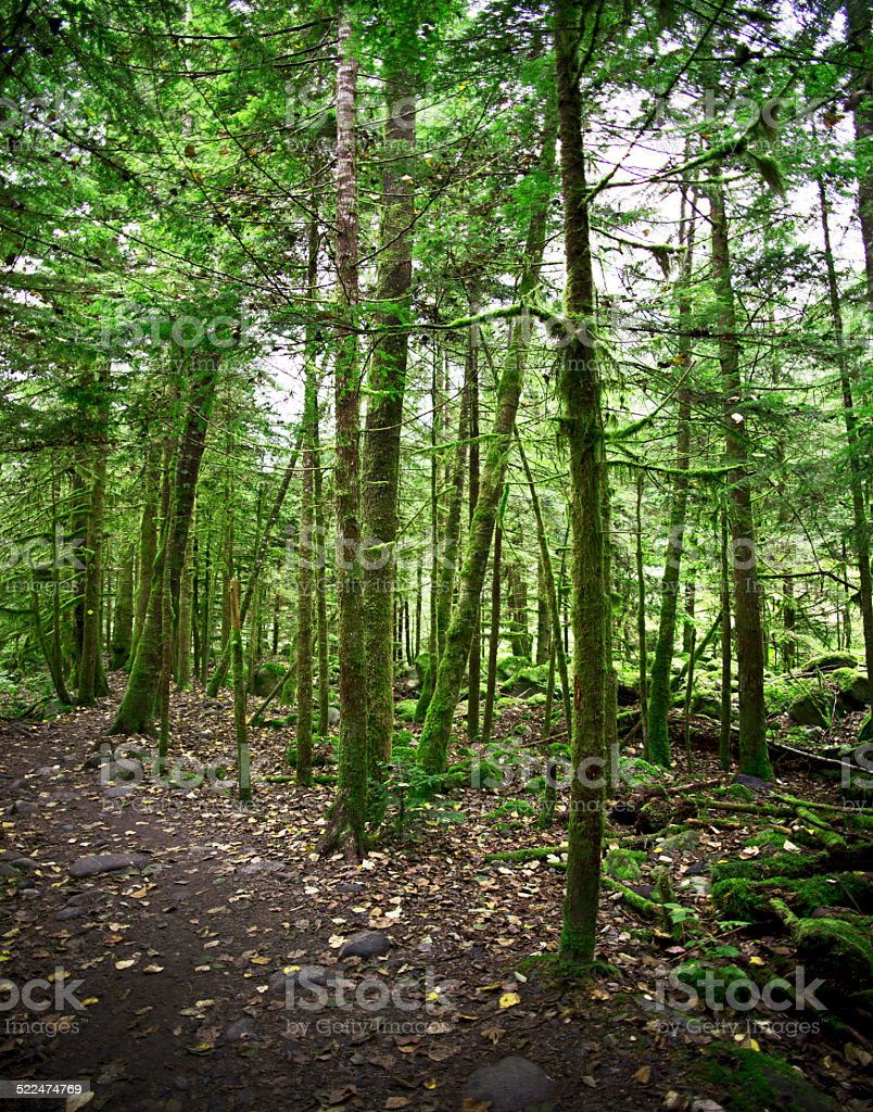 Stone path in forest stock photo