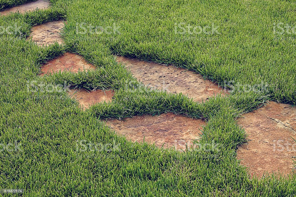 Stone path in green grass. stock photo