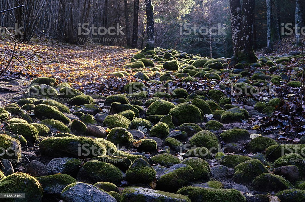 stone path in the forest stock photo