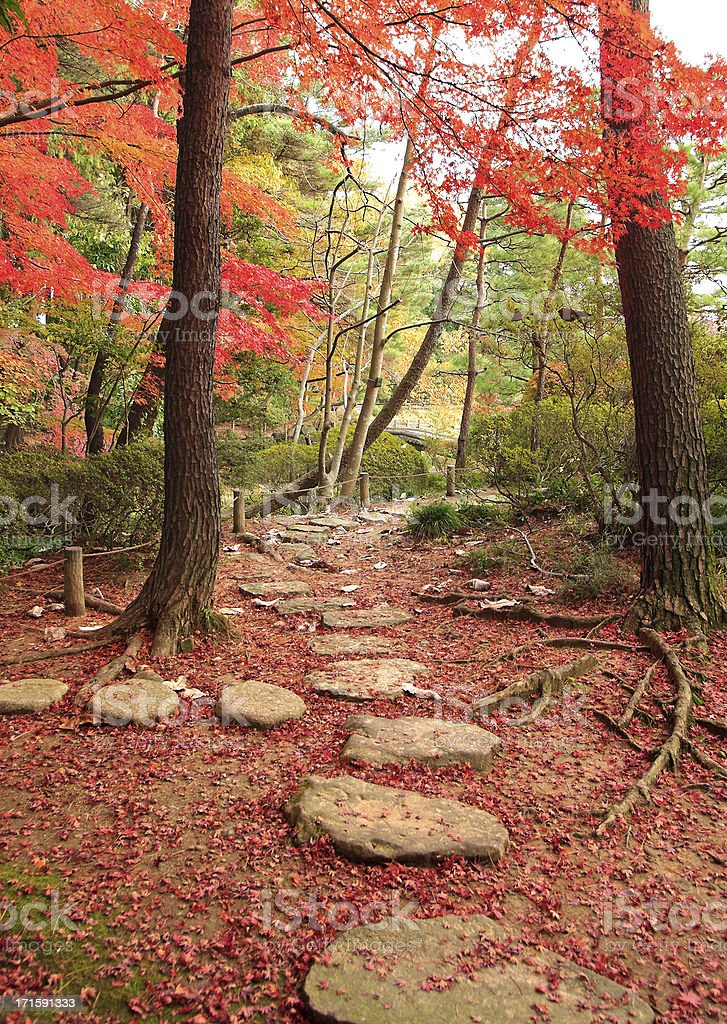 Stone path in the garden royalty-free stock photo
