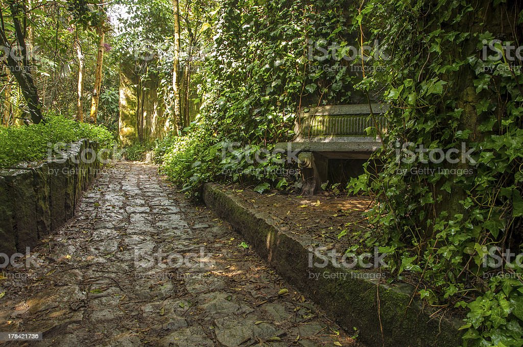 Stone Path through a Forest stock photo