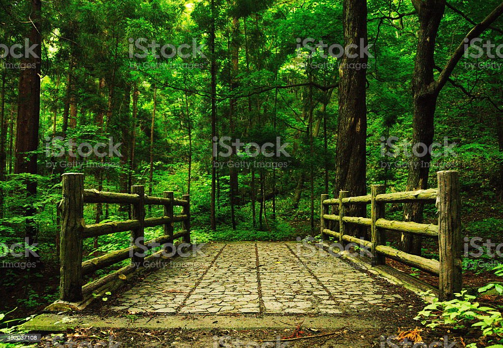 stone paved bridge into the forest stock photo