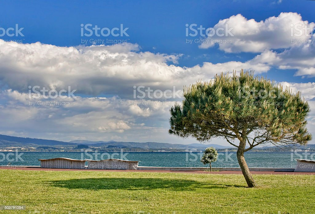 Stone pine and clouds stock photo