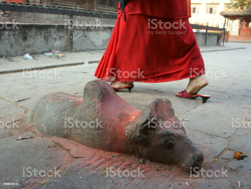 stone sculpture of  cow   facing shiva shrine stock photo