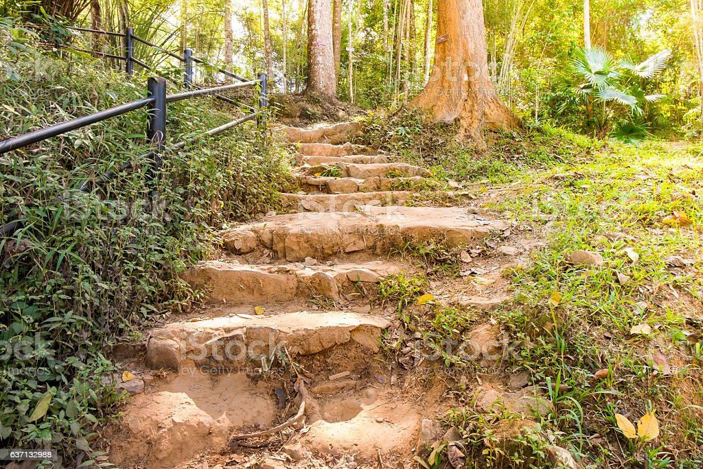 stone staircase to forest among tree stock photo
