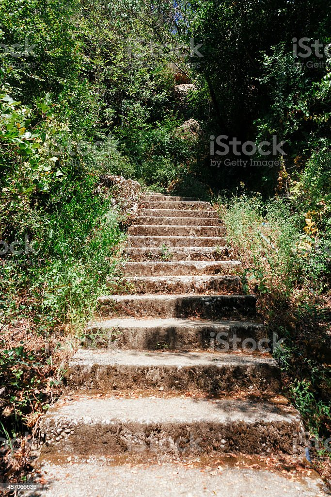 stone stairs in forest, tourism travel destination stock photo