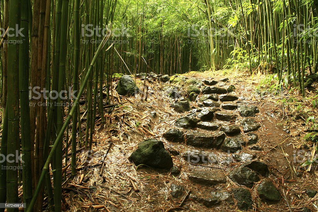 Stone Stairs in the Bamboo Forest royalty-free stock photo