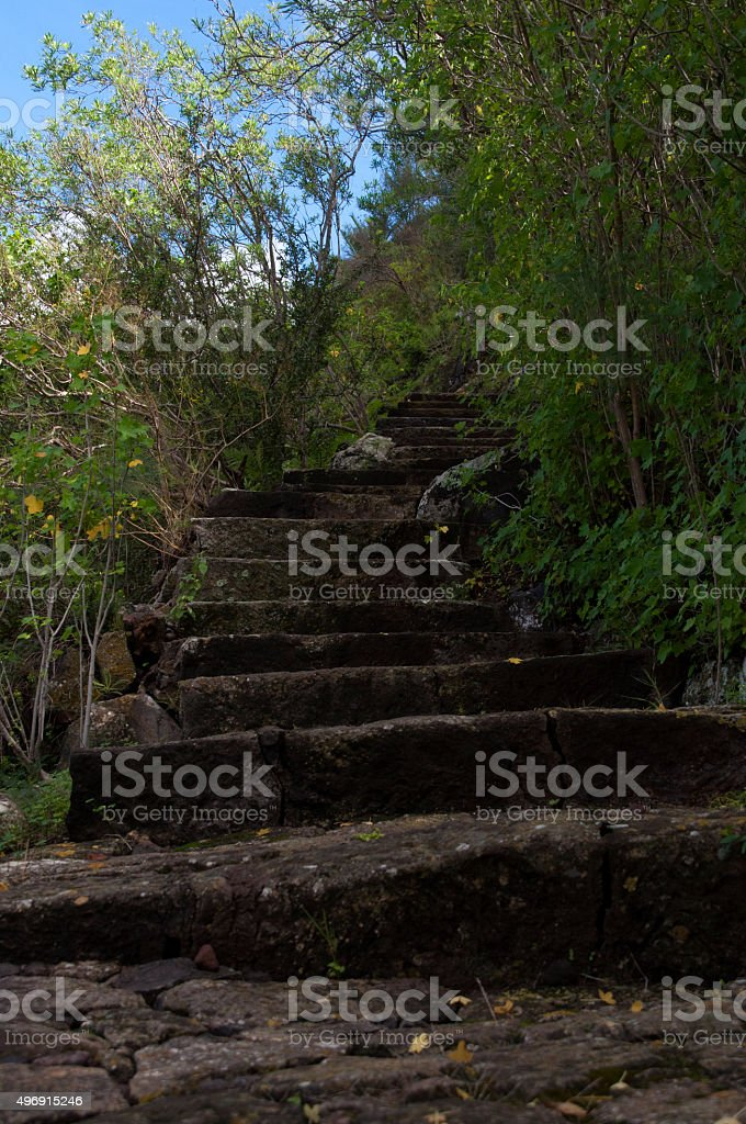 Stone steps leading up to the woodland stock photo