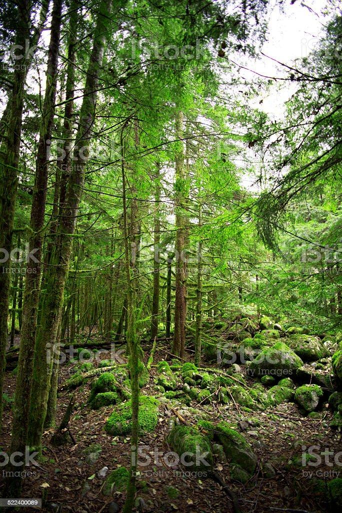 Stone terrain stock photo