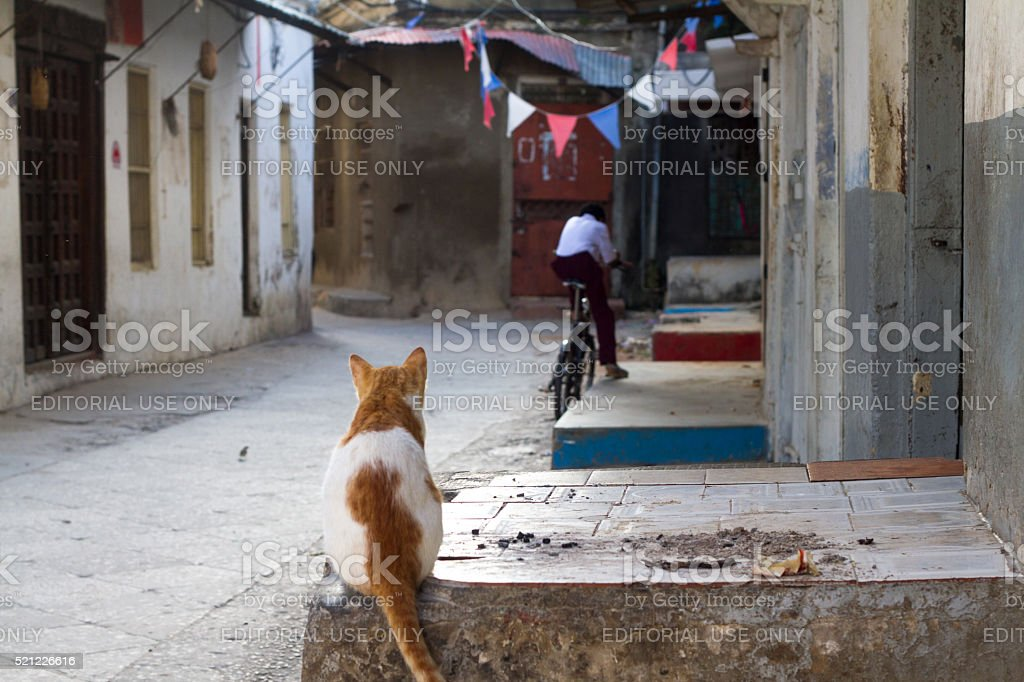 Stone Town, Zanzibar: Cat and Cyclist in Alleyway stock photo
