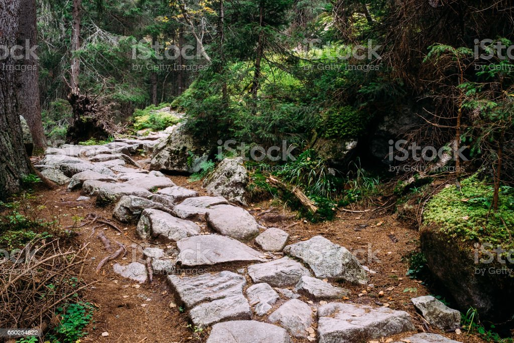Stone trekking path in Studena dolina, Tatra Mountains, Slovakia. stock photo
