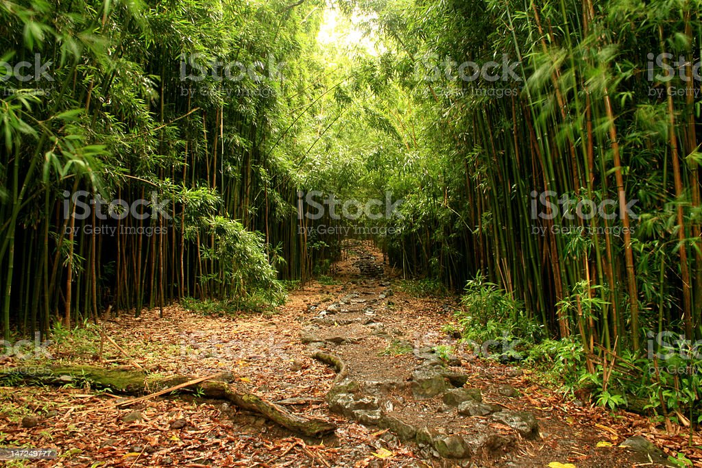 Stone Walkway Through The Bamboo Forest royalty-free stock photo