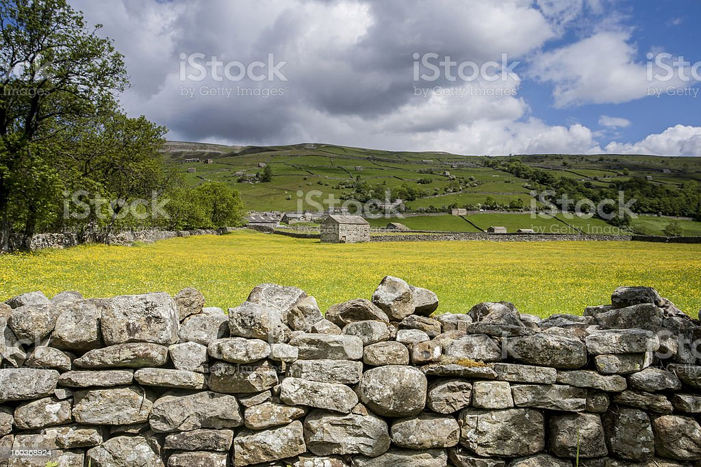 Stone Wall and Buttercup Meadows, Swaledale, Yorkshire, UK royalty-free stock photo