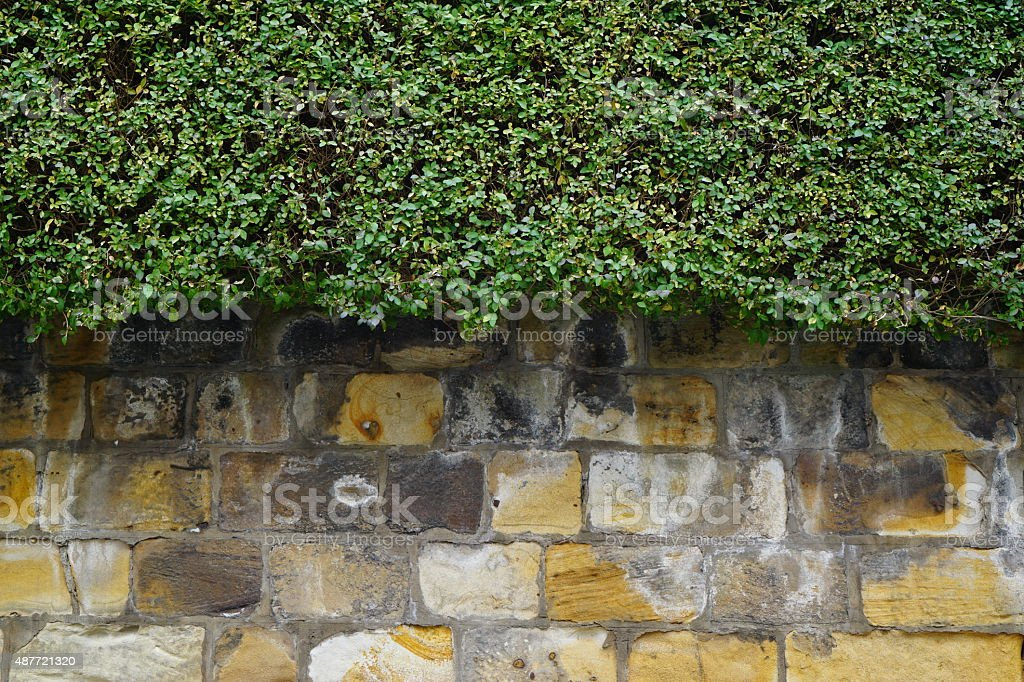 Stone wall and hedge stock photo