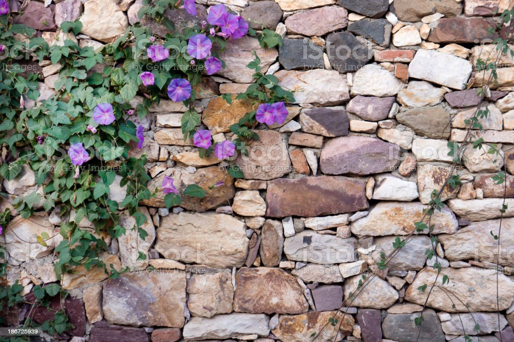 Stone Wall on the Flower royalty-free stock photo