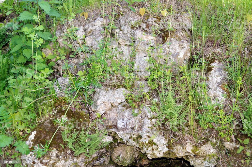 Stone wall with greenery. Texture of nature. Background for text, banner, label. stock photo