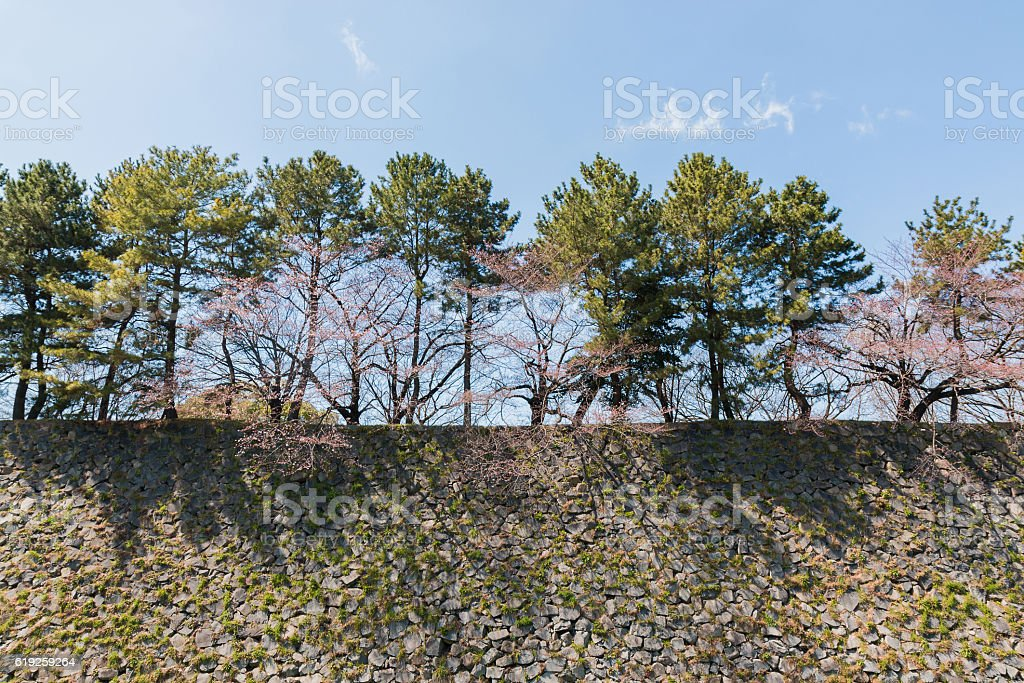 stone wall with trees for defence Enemy. stock photo