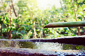 Stone washbasin set in Japanese garden