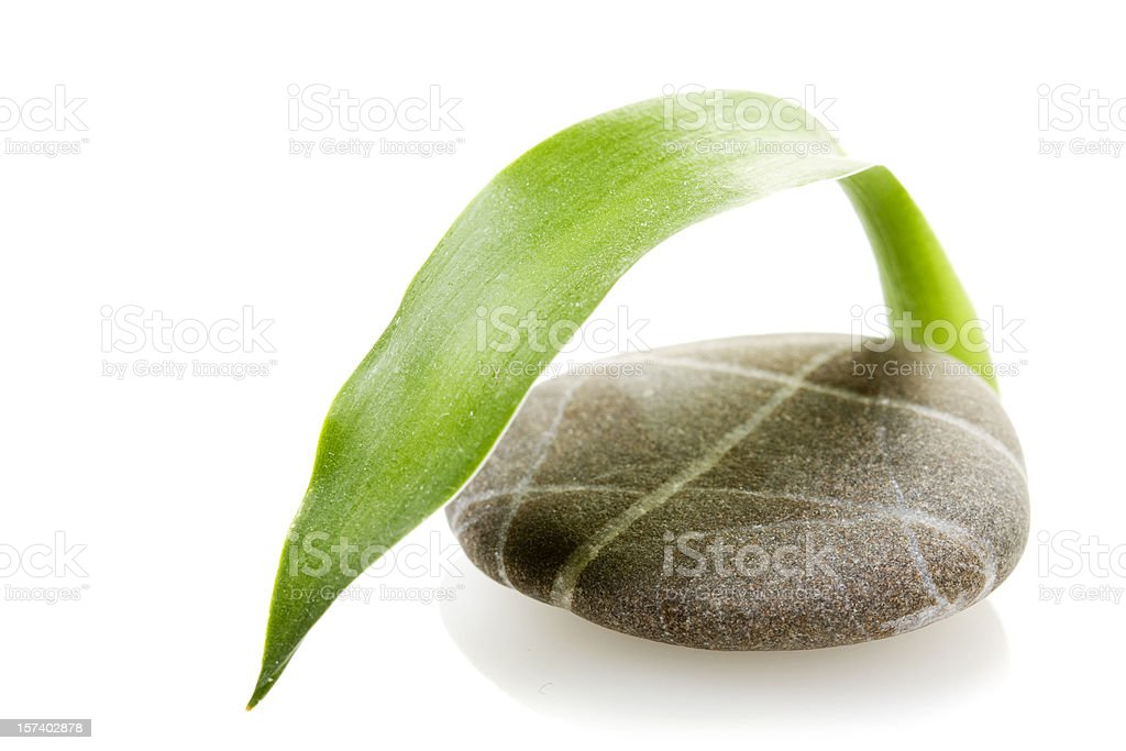 Stone with Bamboo Leaf royalty-free stock photo
