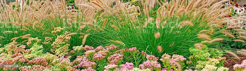 Stonecrop (Sedum) and Fountain Grass (Pennisetum) - panoramic (V) stock photo
