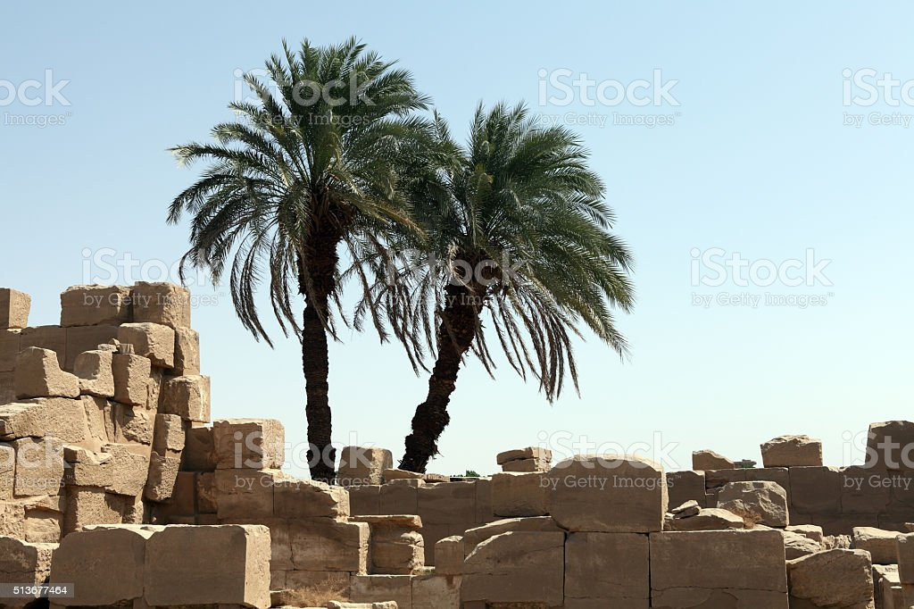 Stones and palm trees stock photo