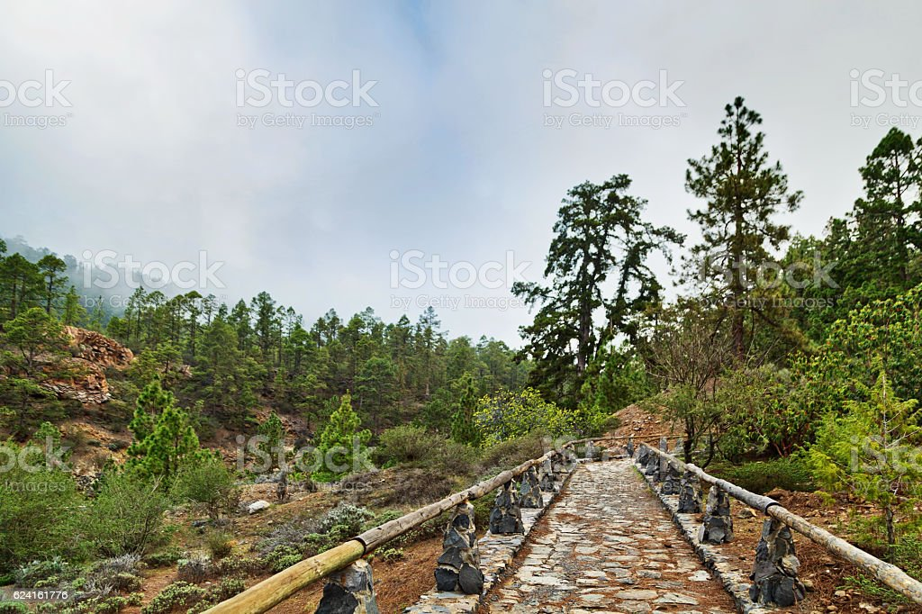 Stones footpath in pine grove stock photo