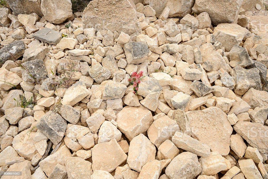 Stones in the Judean Desert stock photo