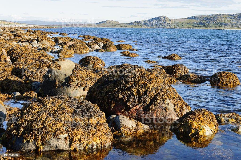 Stones with brown algae at seacoast stock photo