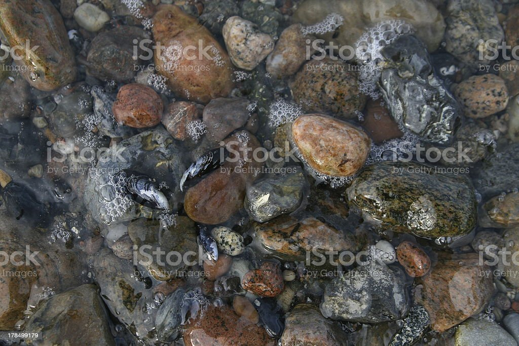 stons and shells on the baltic sea stock photo