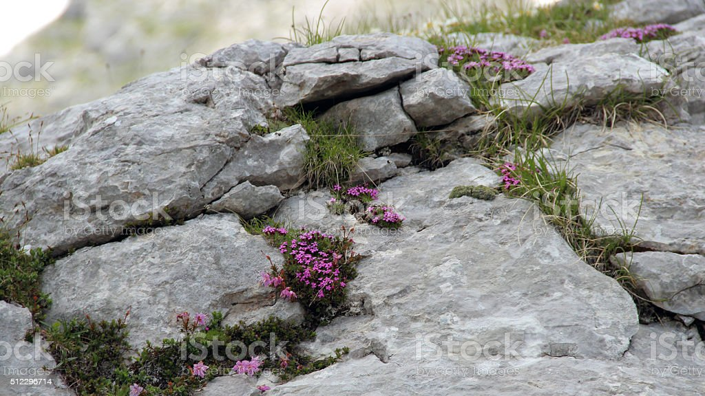 Stony flowers stock photo