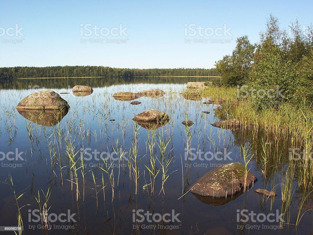 Stony forest lake royalty-free stock photo