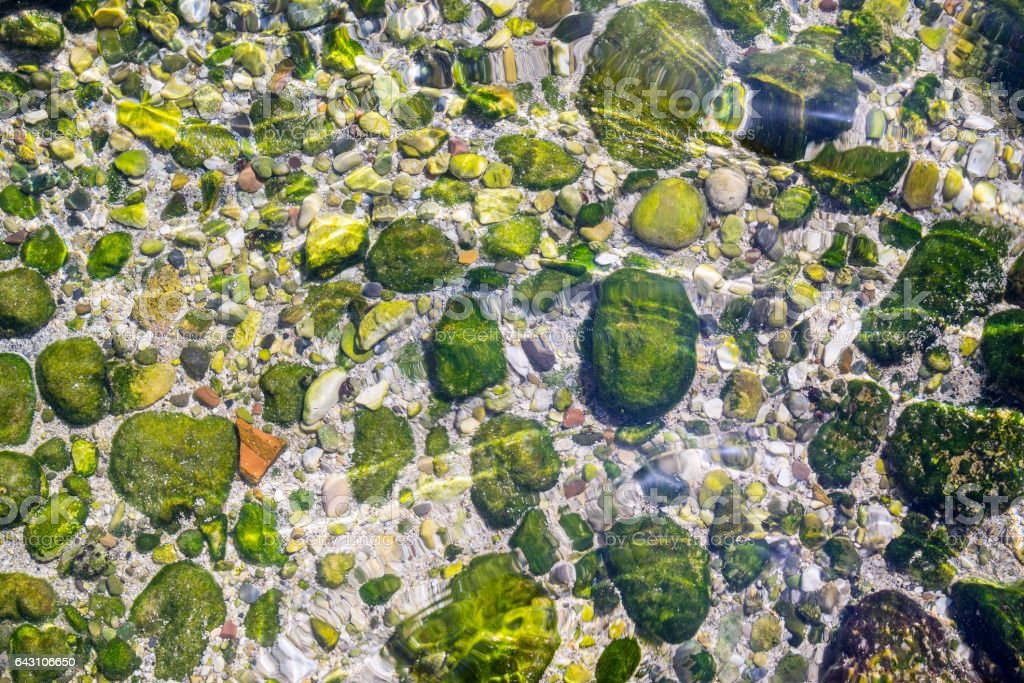 stony seabed through transparent water stock photo