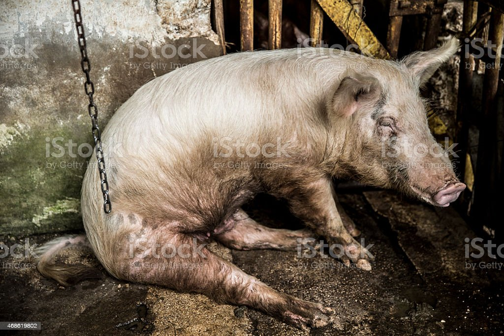 Stop animal cruelty stock photo