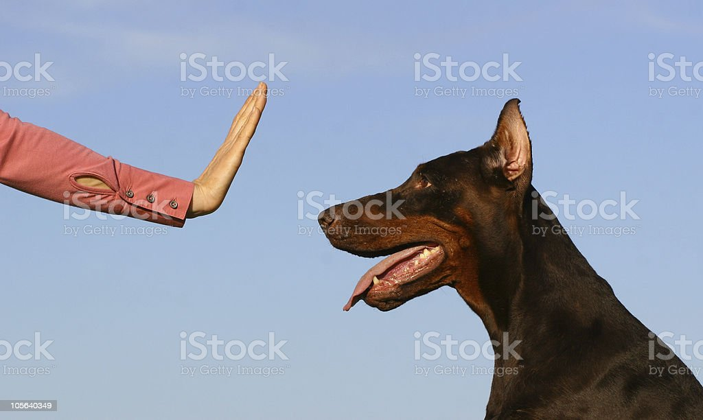 Stop dog stock photo