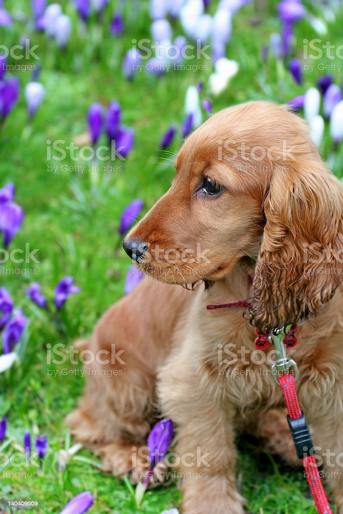 Stop to smell the Flowers royalty-free stock photo