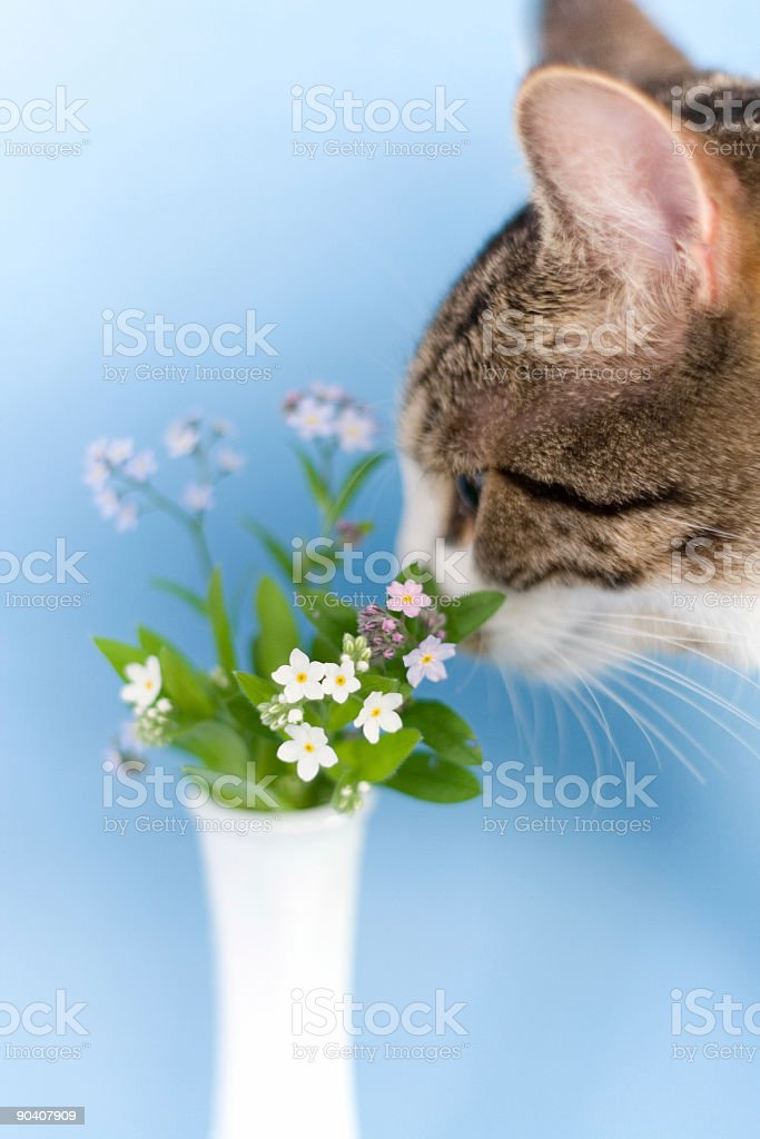 Stopping to smell the forget-me-nots Part II stock photo
