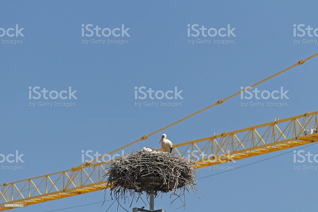 Storch im Nest stock photo