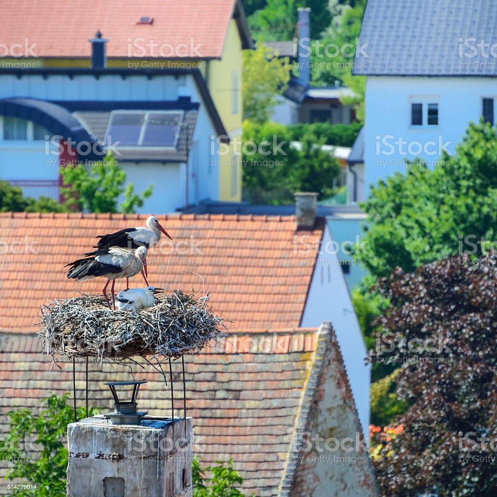 Storch und Familie im Nest im Burgenland stock photo