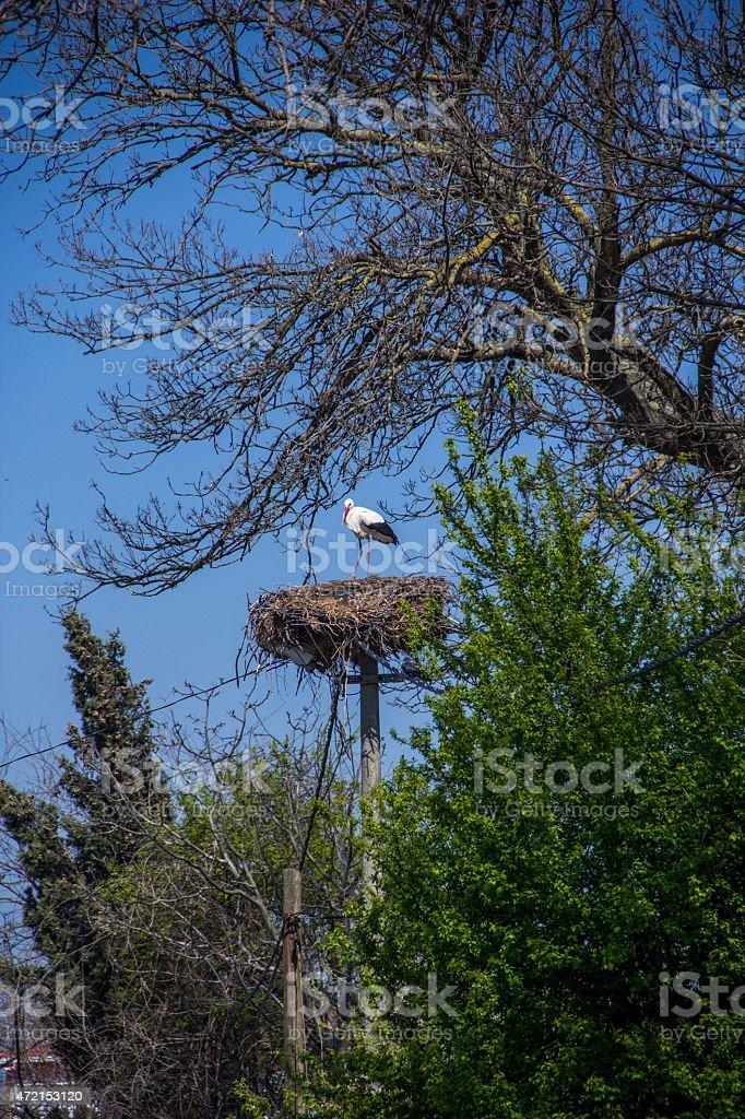 Stork and stork nest. stock photo