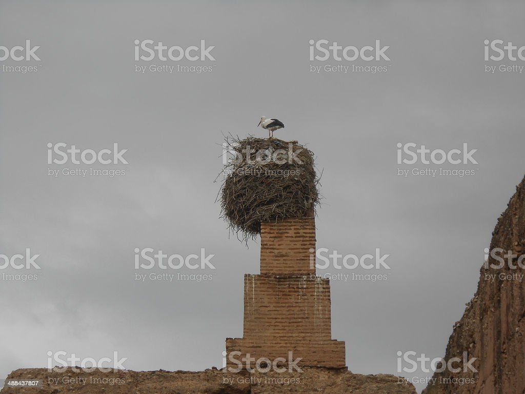 Stork at El Badi palace stock photo