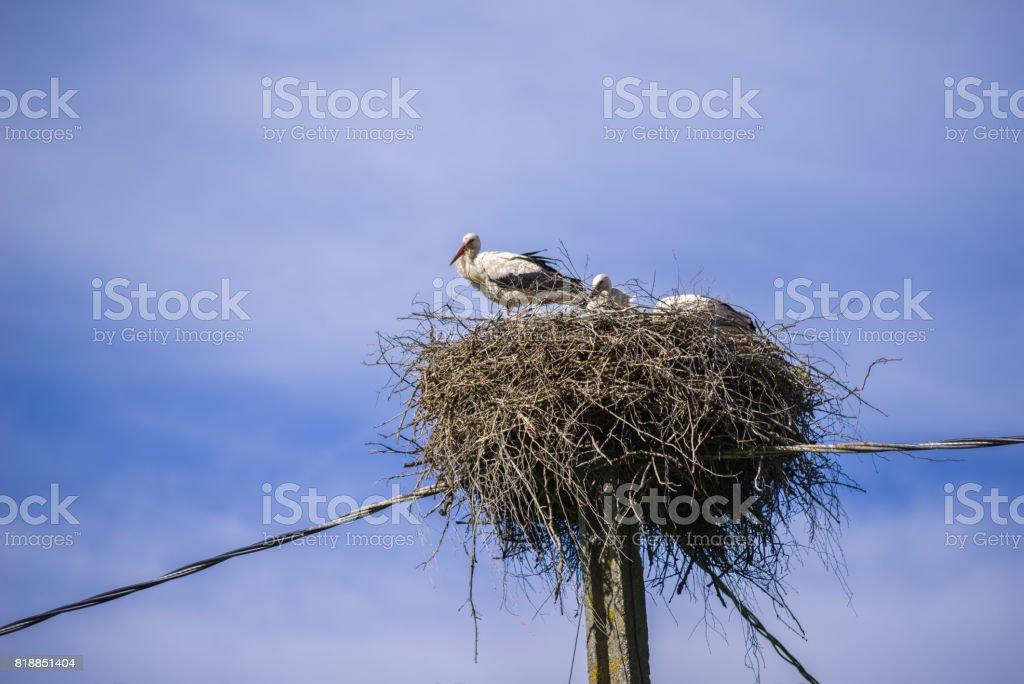 stork family stock photo