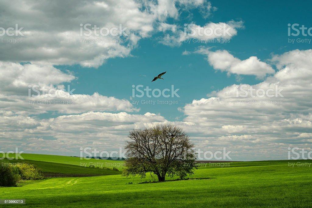 Cigogne volant au-dessus de l'arbre solitaire photo libre de droits