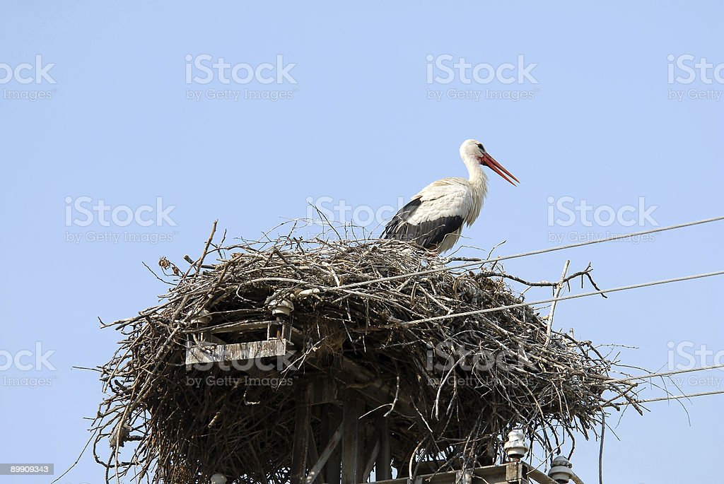 Stork in nest, branch made royalty-free stock photo