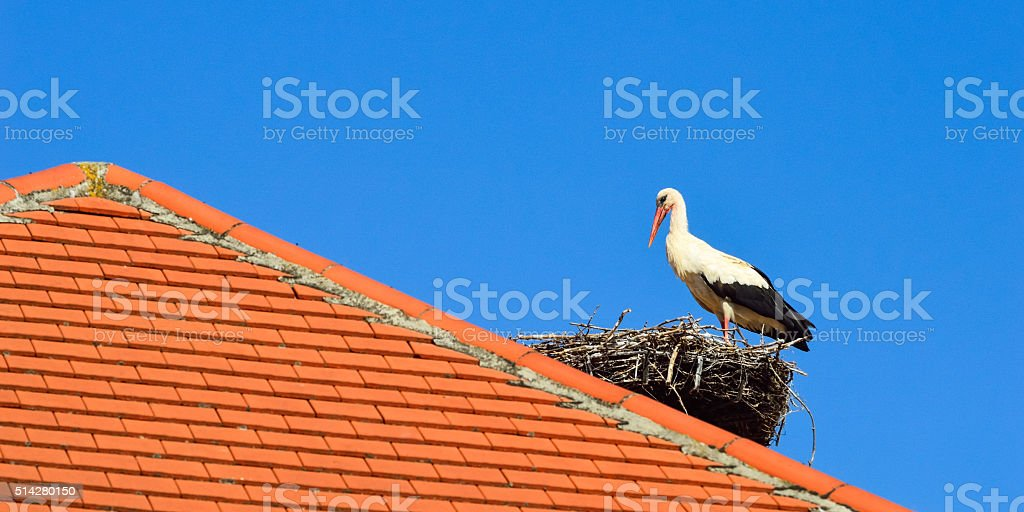 Storch im Nest auf rotem Dach im Burgenland stock photo