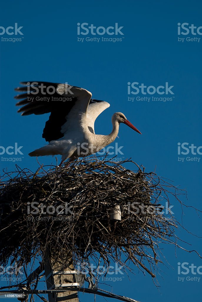 stork in the nest royalty-free stock photo