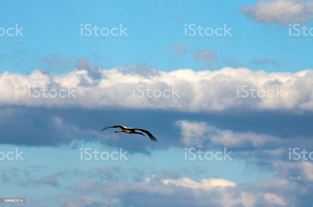Stork in the sky stock photo