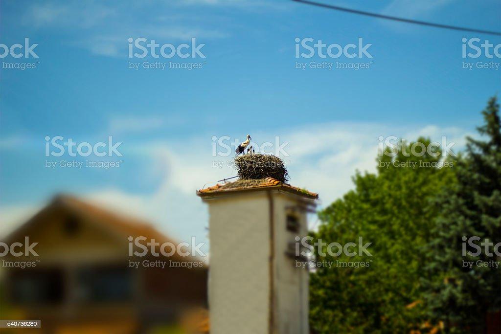 Stork nest in village stock photo