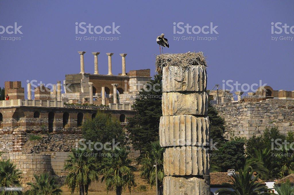 Stork nest on an ancient column stock photo
