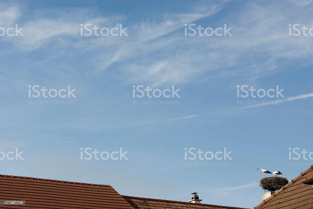 Stork Nest on house top stock photo